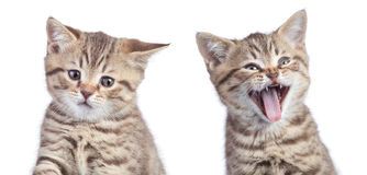 Zwei lustige Katzen mit den gegenüberliegenden Gefühlen eins glücklich und ein anderes unglückliches oder trauriges lokalisiert a stockfoto