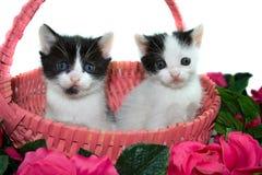 Zwei lustige nette Kätzchen, die in einem rosafarbenen Korb sitzen. Lizenzfreie Stockfotos