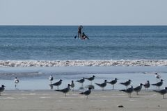 Zwei Mädchen auf einer Radschaufel mit Seemöwen auf dem Strand stockfoto