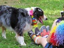 Zwei Mädchen, die Foto der Grenze Collie Dog, Love Parade, Warschau, Polen, im Juni 2018 machen lizenzfreie stockfotos