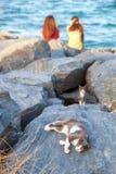 Zwei Mädchen und zwei Katzen, die auf dem felsigen Ufer des Bosphorus, Istanbul stillstehen stockbild