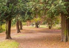 Zwei Mädchen unter der Herbstüberdachung von Bäumen Stockbild