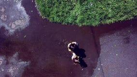 Zwei Mädchenspielen und -betrieb durch Pfützen im Park stock footage