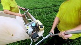 Zwei Männer erfassen Tee an einer Teeplantage mit einem automatischen Scherer für den Schnitt, Ausschnitt und zusammenbauenden Te stock footage