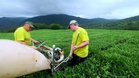 Zwei Männer erfassen Tee an einer Teeplantage mit einem automatischen Scherer für den Schnitt, Ausschnitt und zusammenbauenden Te stock video footage