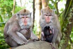 Zwei Mütter mit babys im Wald Lizenzfreies Stockbild