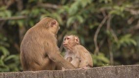 Zwei Makaken auf Dach Lizenzfreie Stockfotos