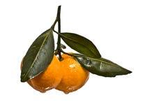 Zwei Mandarinen mit Blättern Lizenzfreies Stockbild