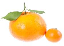 Zwei Mandarinen mit grünen Blättern. großes aand klein. Stockfoto