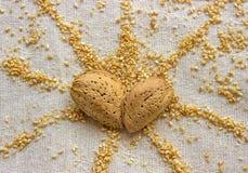 Zwei Mandelnüsse in einer Herzform Samen des indischen Sesams in Form a Stockbilder