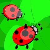 Zwei Marienkäfer auf einem Blatt Stockbild