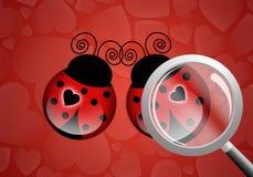 Zwei Marienkäfer mit Herzen Lizenzfreie Stockbilder
