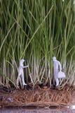 Zwei menschliche Abbildungen in den Weizensprößlingen Stockfoto