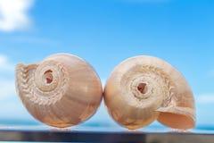 Zwei Nautilusmuscheln auf Himmelhintergrund Stockfoto