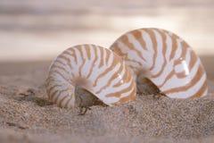 Zwei Nautilusmuscheln auf Strand, Sonnenaufgang und tropischem Meer Lizenzfreie Stockfotografie