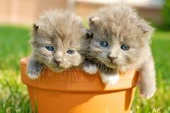 Zwei nette Kätzchen Stockbilder