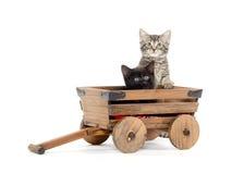 Zwei nette Kätzchen Stockfotos