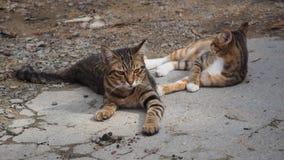 Zwei nette Katzen Lizenzfreies Stockfoto