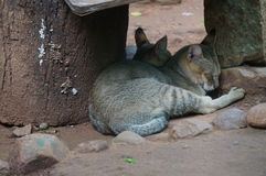 Zwei nette Katzen Stockbild