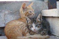 Zwei nette Katzen, die auf Treppe liegen Lizenzfreie Stockfotos