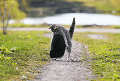 Zwei nette Katzen, die den Spaß spielt im Yard auf dem Gras haben Lizenzfreies Stockbild