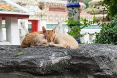 Zwei nette Katzen, die zusammen auf enormem Felsen schlafen Lizenzfreies Stockfoto