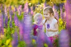 Zwei nette kleine Schwestern auf dem blühenden Lupinegebiet Lizenzfreies Stockfoto