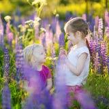 Zwei nette kleine Schwestern auf dem blühenden Lupinegebiet Stockfotos