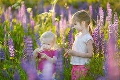 Zwei nette kleine Schwestern auf dem blühenden Lupinegebiet Stockbilder