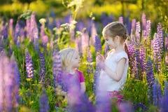 Zwei nette kleine Schwestern auf dem blühenden Lupinegebiet Stockbild