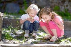 Zwei nette kleine Schwestern, die eine Wanze aufpassen Stockbild