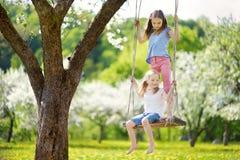 Zwei nette Schwestern, die Spaß auf einem Schwingen in blühendem altem Apfelbaumgarten draußen am sonnigen Frühlingstag haben stockfotografie