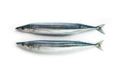 Zwei netter geformter pazifischer saira/Makrelenspieß Makrelenhecht Cololabis/ Lizenzfreie Stockbilder