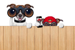 Zwei neugierige Hunde stockbilder