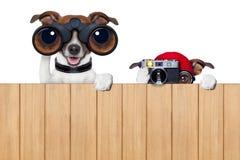 Zwei neugierige Hunde Lizenzfreies Stockbild