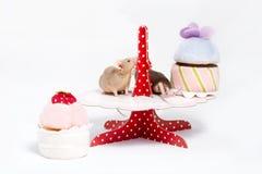 Zwei neugierige inländische Mäuse sitzen auf einer Platte mit Plüschkuchen Stockbilder