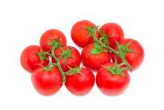 Zwei Niederlassungen der reifen roten Tomaten Lizenzfreies Stockbild
