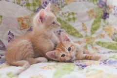 Zwei orange Kätzchen der getigerten Katze, die auf eine Steppdecke legen Stockfotos