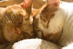 Zwei orange Katzen der getigerten Katze, die zusammen mit ihren Köpfen schlafen Lizenzfreie Stockfotos