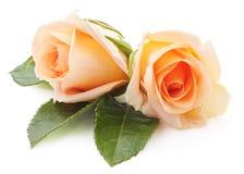 Zwei orange Rosen Stockbild