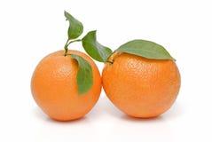 Zwei Orangen mit Blättern. Stockfotos