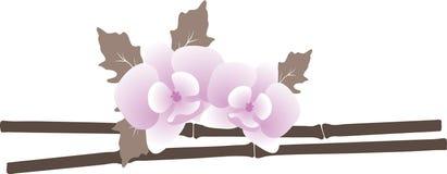 Zwei Orchideen. Lizenzfreie Stockbilder