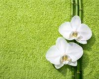 Zwei Orchideen und Niederlassungen Bambus liegend auf hellgrünem Frotteestoff Angesehen von oben Stockfotos