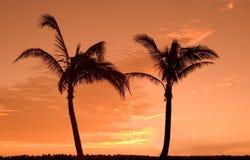 Zwei Palmen Stockfotos