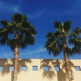 Zwei Palmen lizenzfreie stockfotos