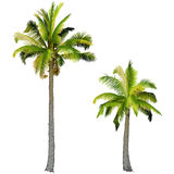 Zwei Palmen, Lizenzfreie Stockfotos