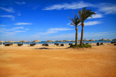 Zwei Palmen auf dem Strand lizenzfreie stockbilder