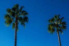Zwei Palmen auf einem Himmelhintergrund Lizenzfreies Stockfoto