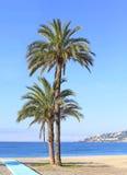 Zwei Palmen auf einem Strand Stockbild