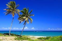 Zwei Palmen auf Küstenlinie Lizenzfreie Stockbilder